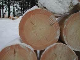 зимний лес для сруба